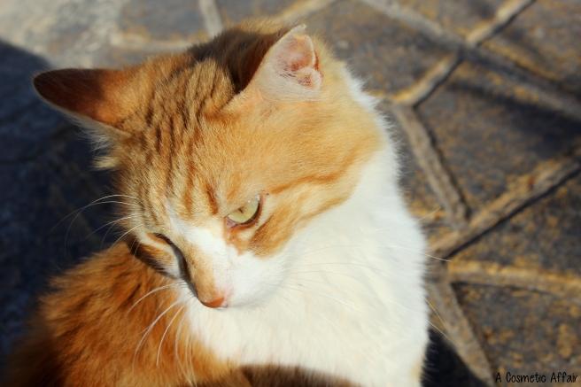 Cute, cat, malta, travel