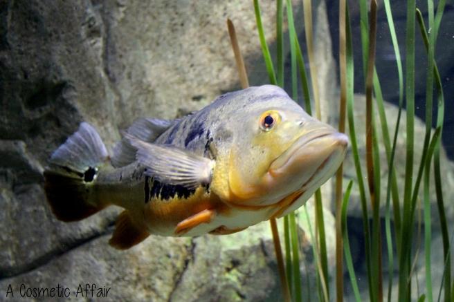 ACA Malta Aquarium 11