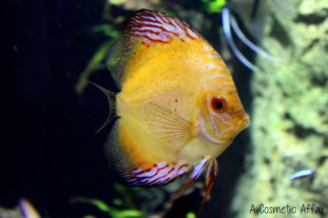 ACA Malta Aquarium 12