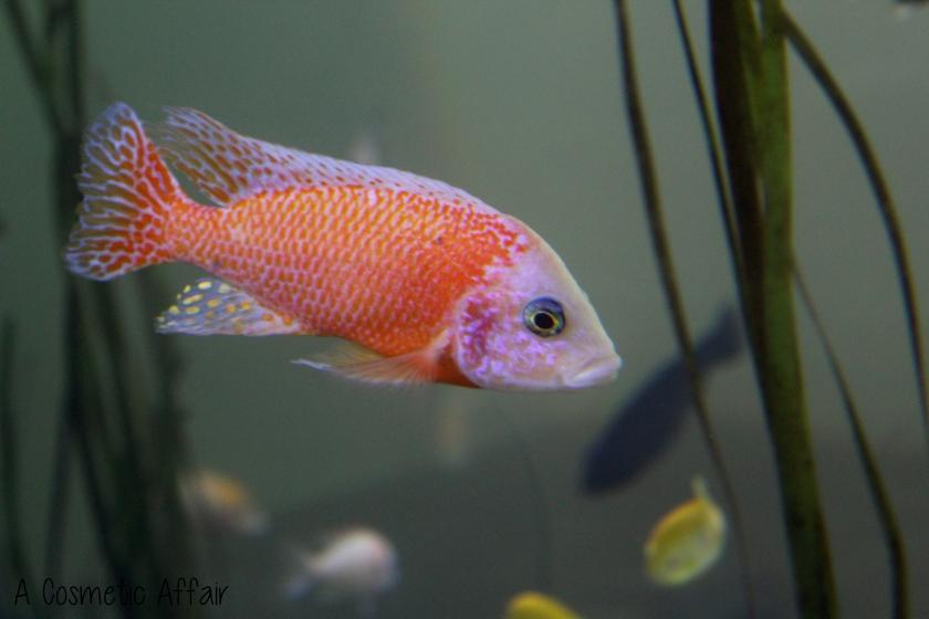 ACA Malta Aquarium 13