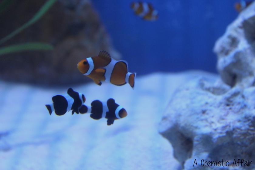 ACA Malta Aquarium 3