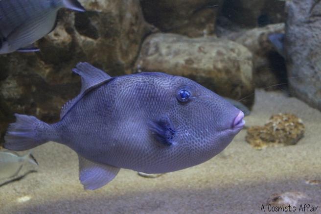ACA Malta Aquarium 4