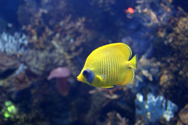 ACA Malta Aquarium 7