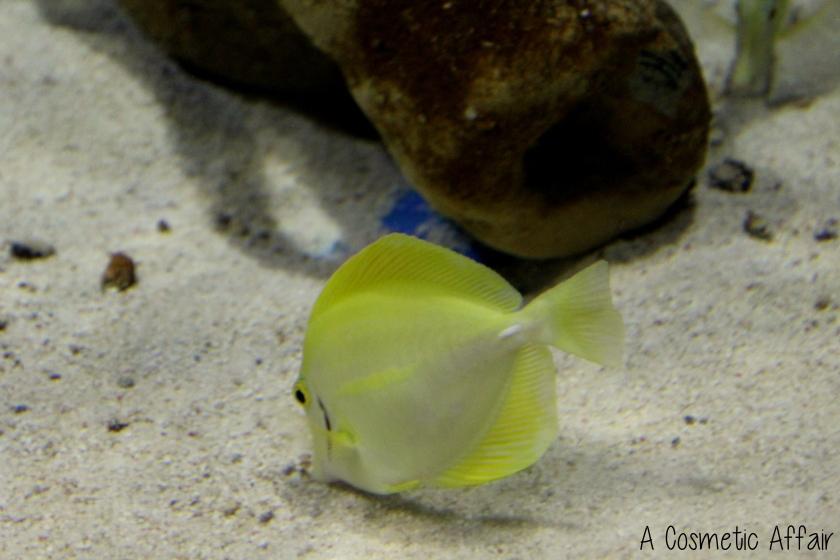 ACA Malta Aquarium 8